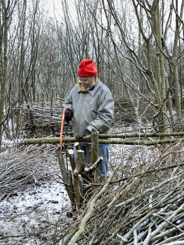 Hazel Coppicing